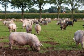 www.pigprogress.net